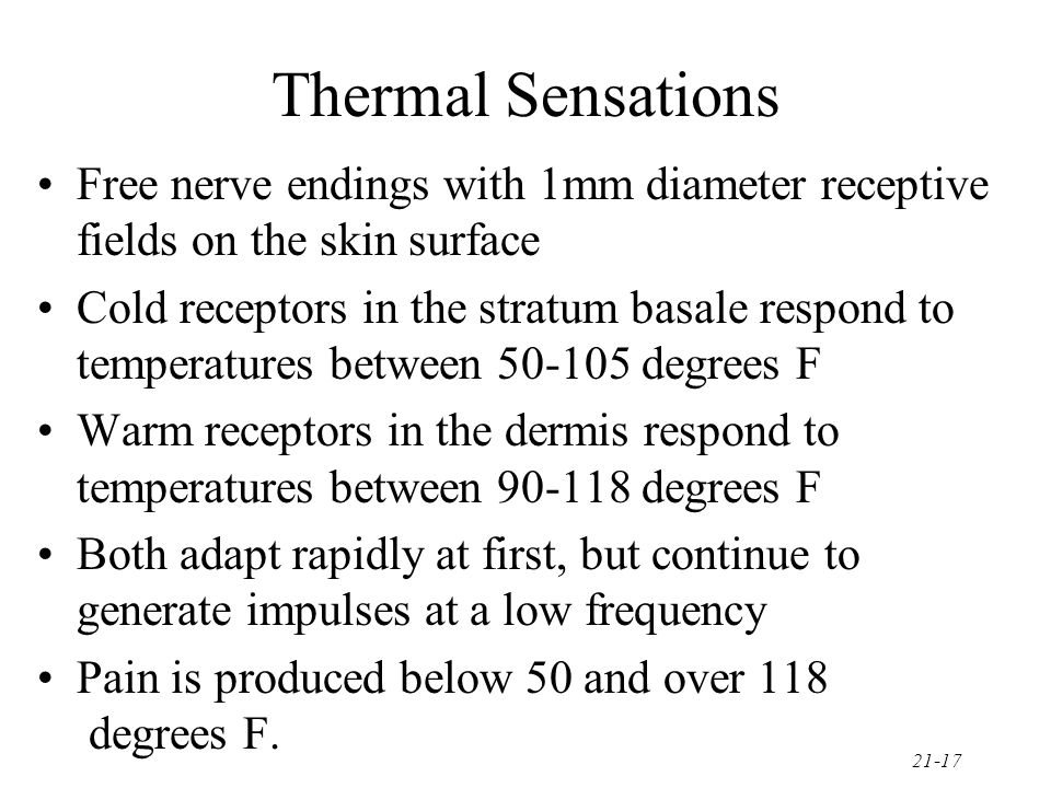 Thermal Sensations Free nerve endings with 1mm diameter receptive fields on the skin surface.