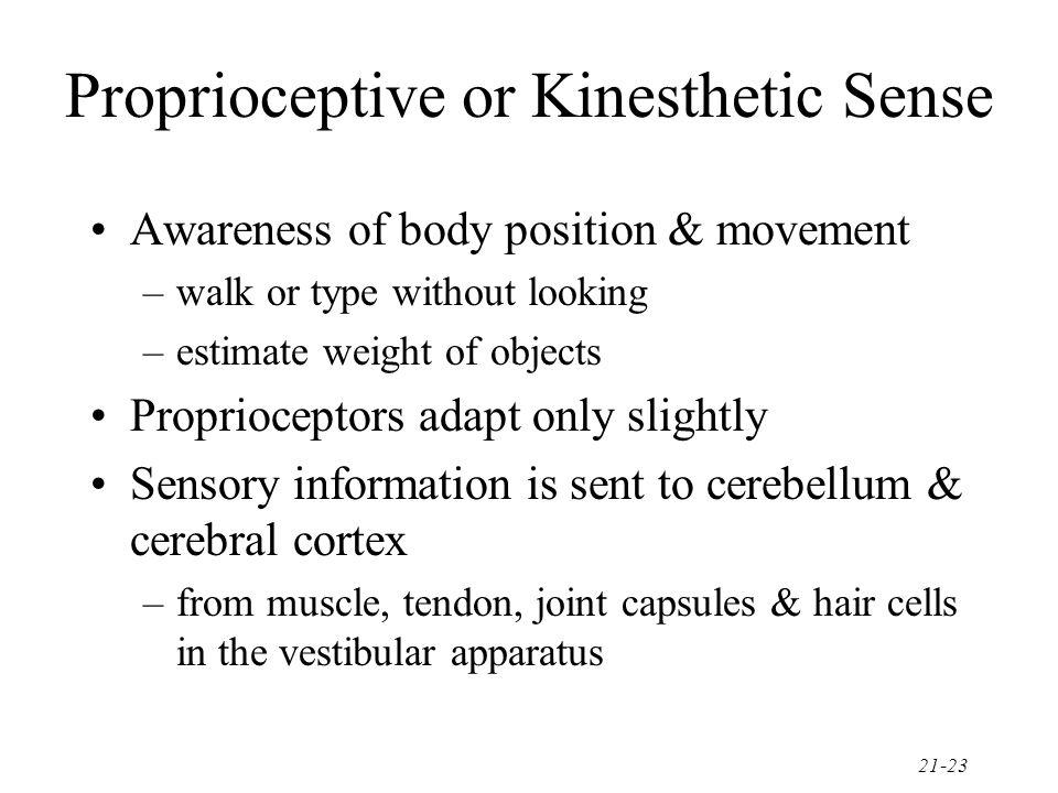 Proprioceptive or Kinesthetic Sense