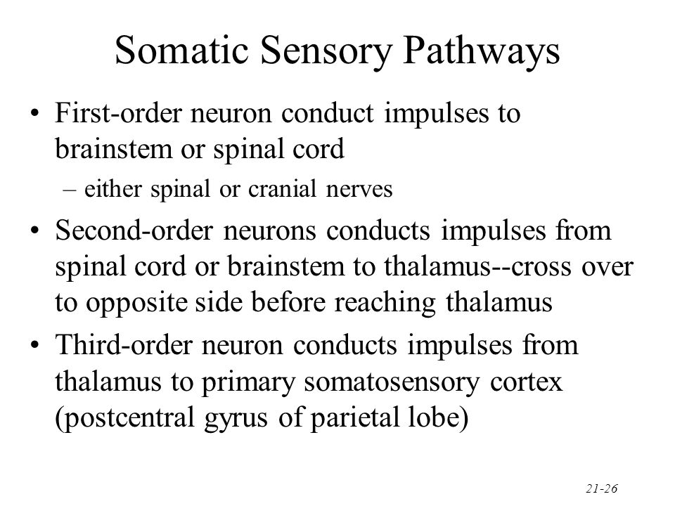 Somatic Sensory Pathways