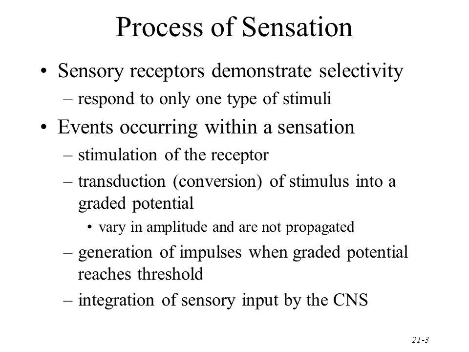 Process of Sensation Sensory receptors demonstrate selectivity