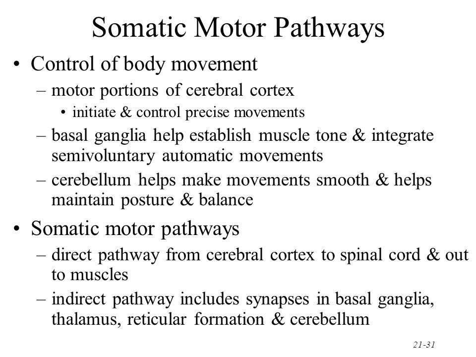 Somatic Motor Pathways