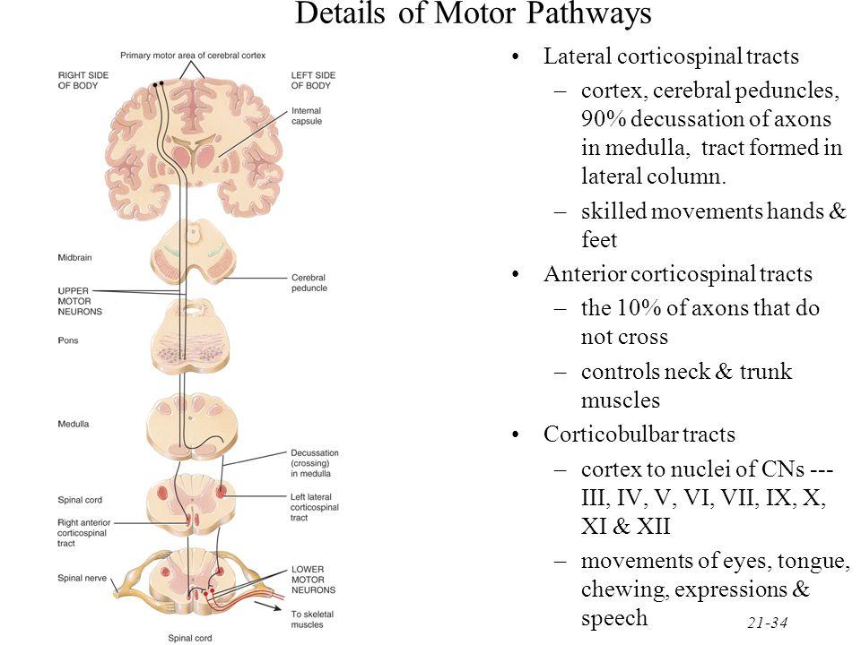 Details of Motor Pathways