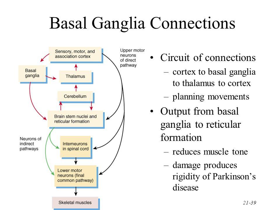 Basal Ganglia Connections