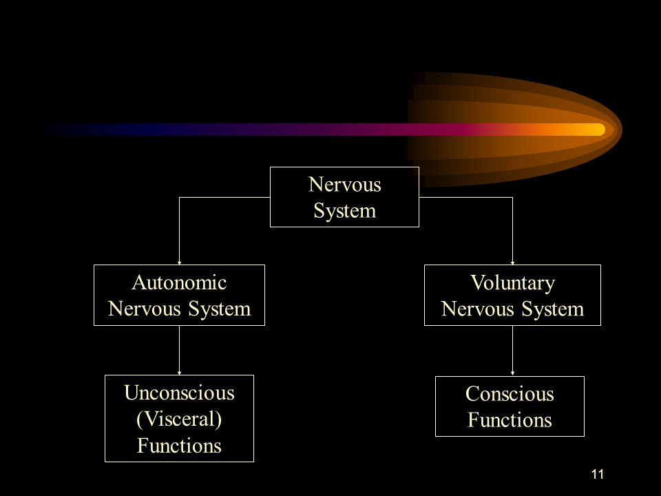 Autonomic Nervous System Voluntary Nervous System