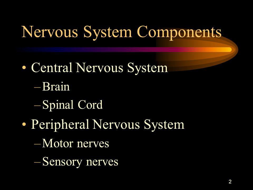 Nervous System Components