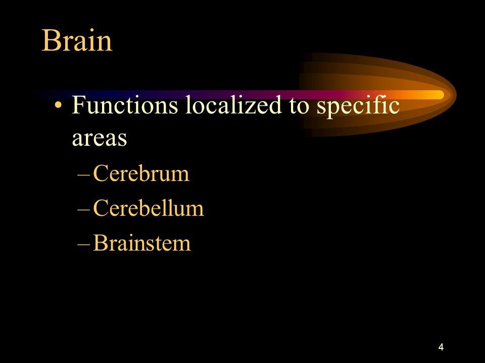 Brain Functions localized to specific areas Cerebrum Cerebellum