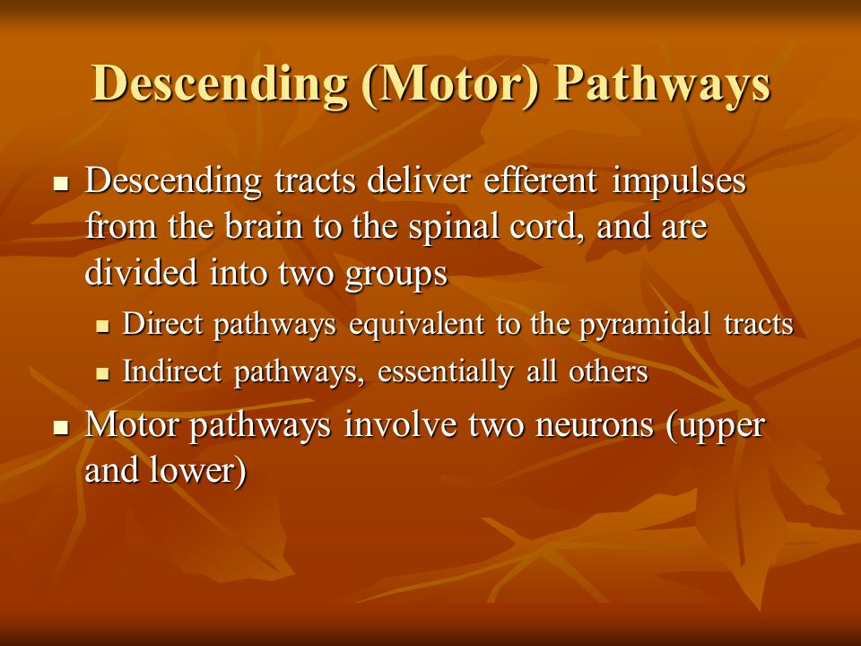 Descending (Motor) Pathways