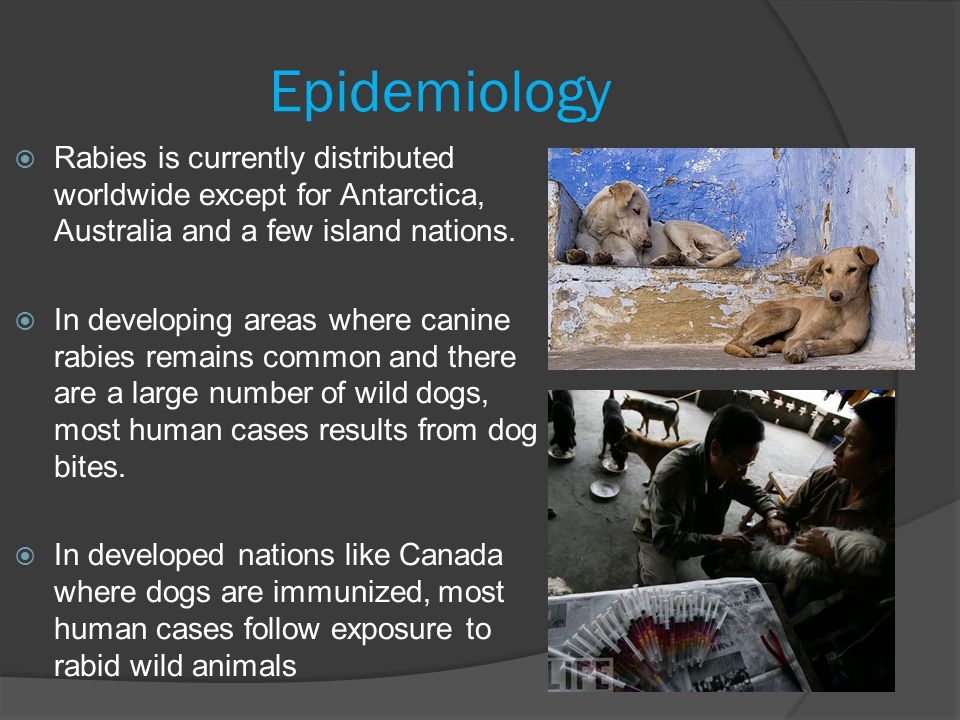 Epidemiology Rabies is currently distributed worldwide except for Antarctica, Australia and a few island nations.