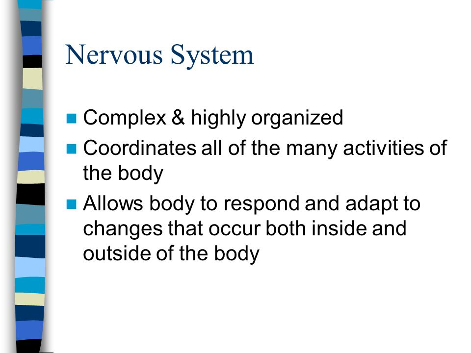 Nervous System Complex & highly organized