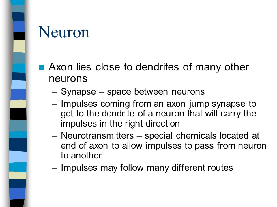 Neuron Axon lies close to dendrites of many other neurons