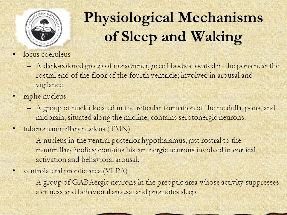 Physiological Mechanisms of Sleep and Waking