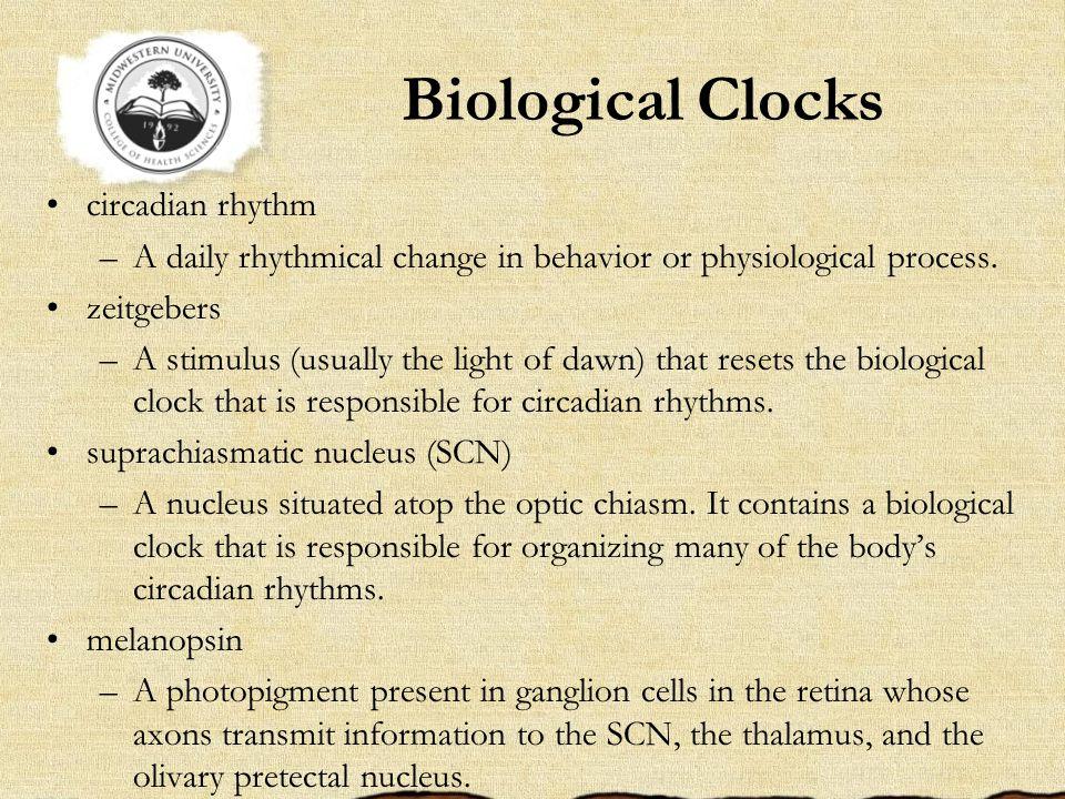 Biological Clocks circadian rhythm