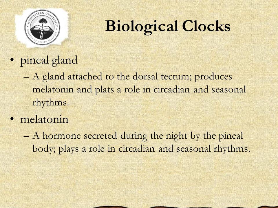 Biological Clocks pineal gland melatonin