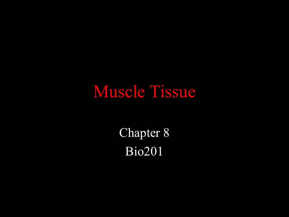 Muscle Tissue Chapter 8 Bio201