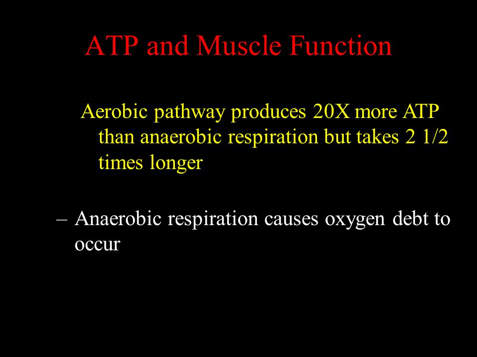 ATP and Muscle Function
