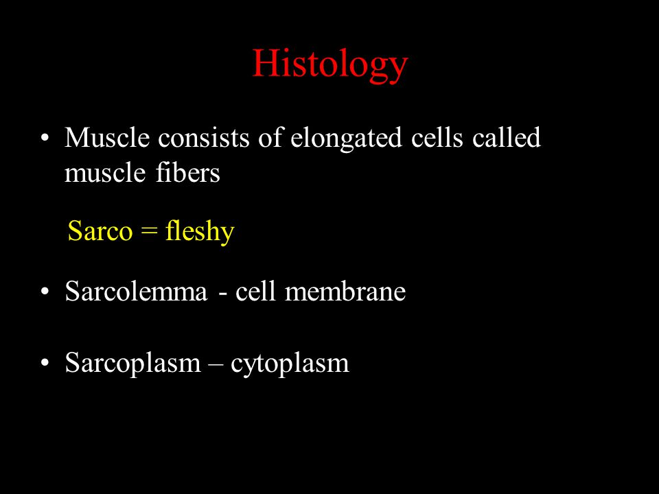 Histology Muscle consists of elongated cells called muscle fibers