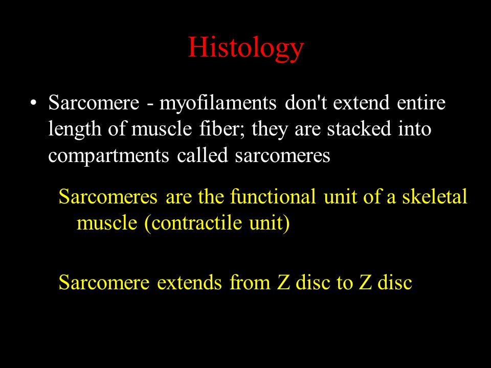 Histology Sarcomere - myofilaments don t extend entire length of muscle fiber; they are stacked into compartments called sarcomeres.