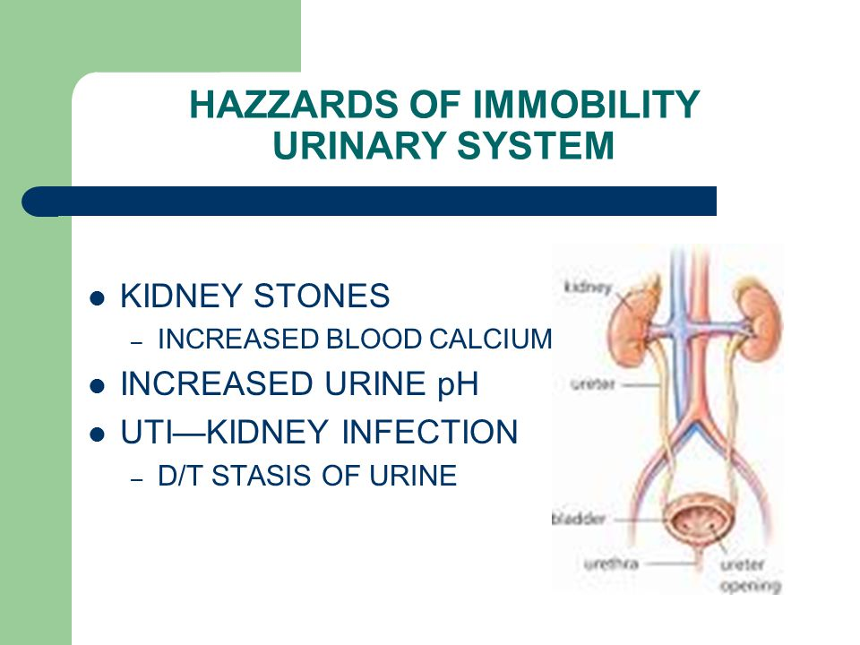HAZZARDS OF IMMOBILITY URINARY SYSTEM