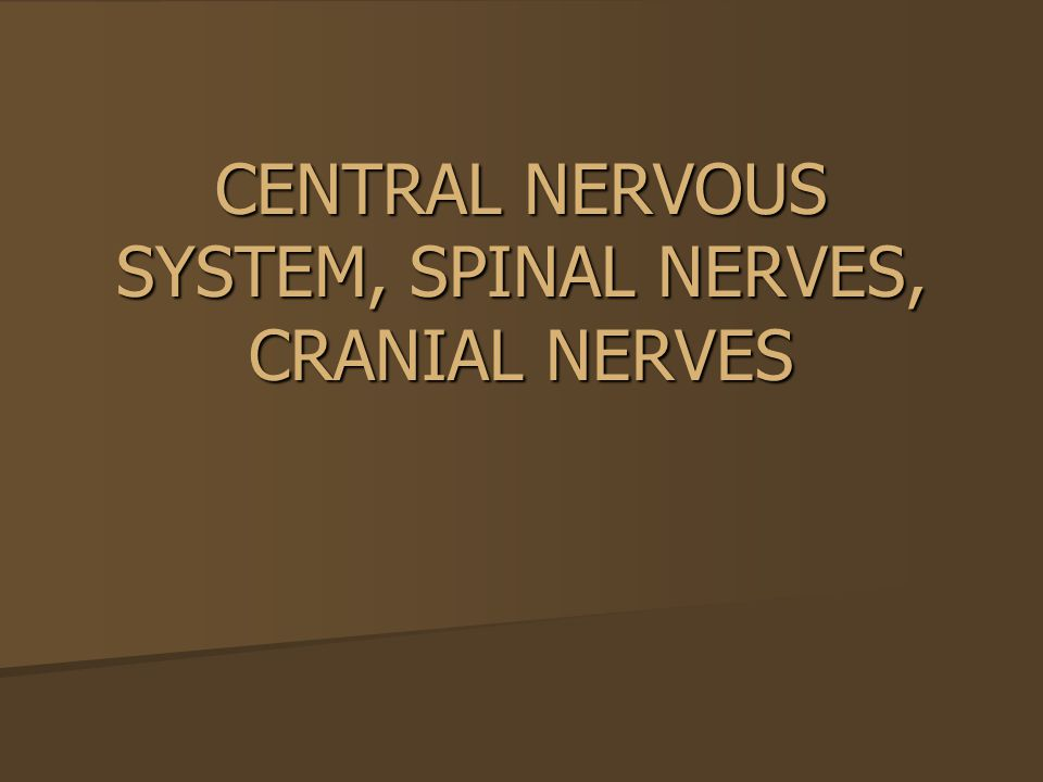 CENTRAL NERVOUS SYSTEM, SPINAL NERVES, CRANIAL NERVES