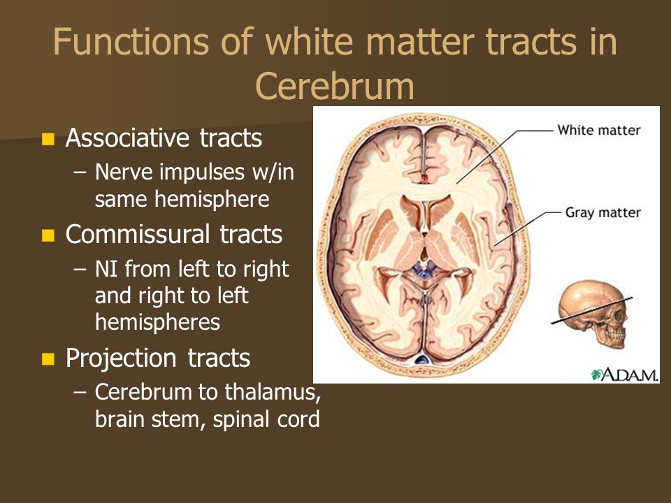 Functions of white matter tracts in Cerebrum