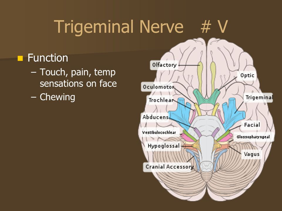 Trigeminal Nerve # V Function Touch, pain, temp sensations on face