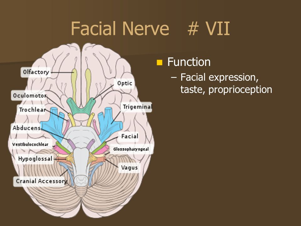Facial Nerve # VII Function Facial expression, taste, proprioception