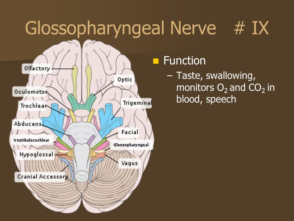 Glossopharyngeal Nerve # IX