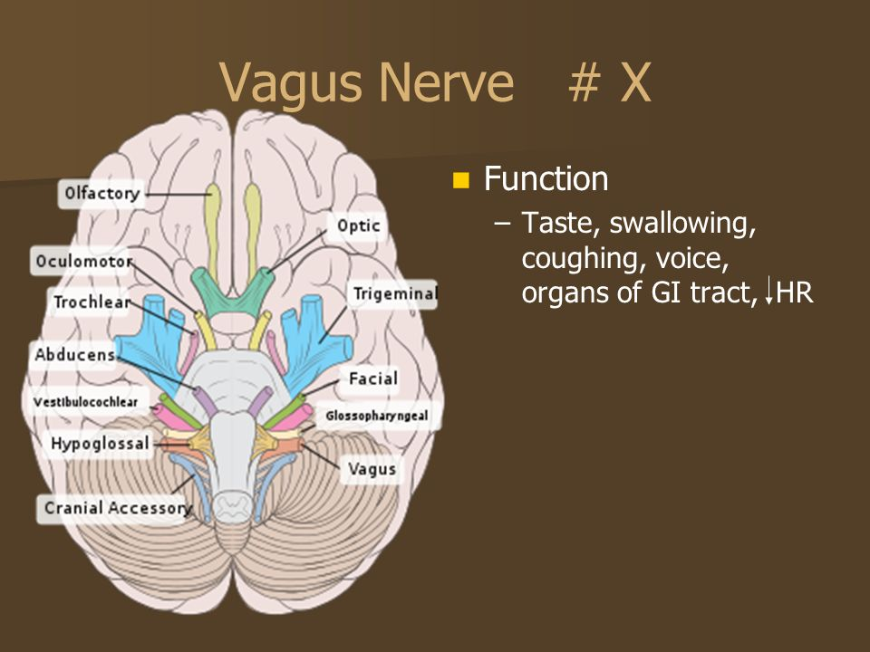 Vagus Nerve # X Function