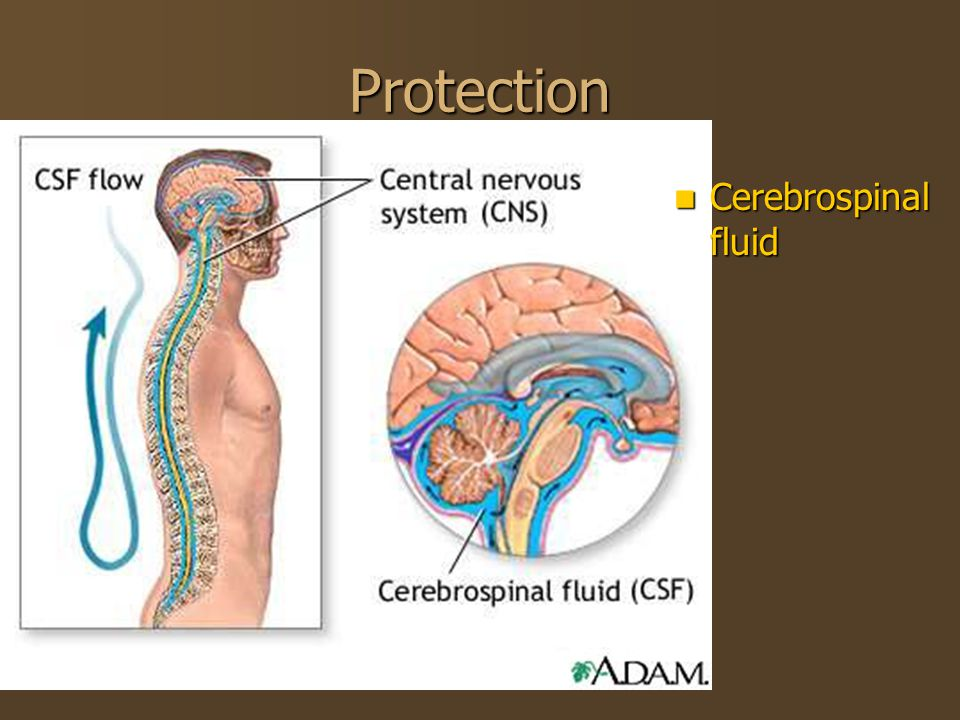 Protection Cerebrospinal fluid