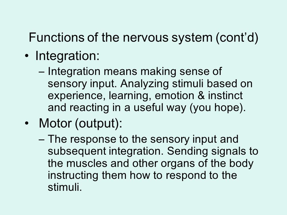 Functions of the nervous system (cont'd)