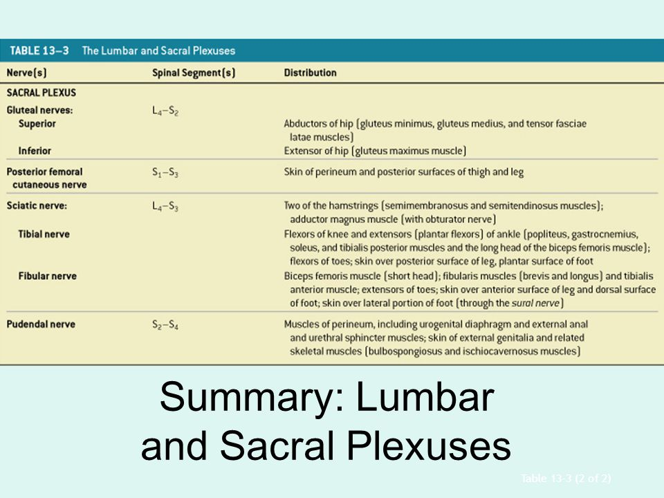 Summary: Lumbar and Sacral Plexuses
