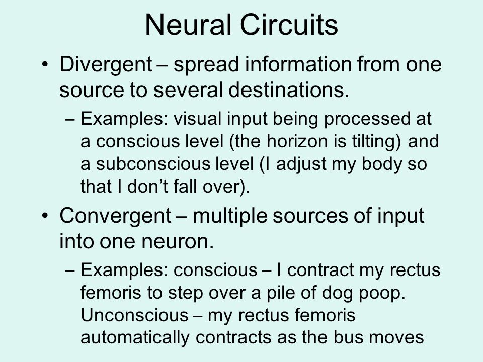 Neural Circuits Divergent – spread information from one source to several destinations.