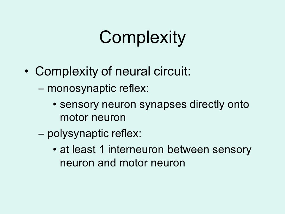 Complexity Complexity of neural circuit: monosynaptic reflex:
