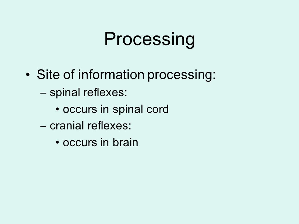 Processing Site of information processing: spinal reflexes: