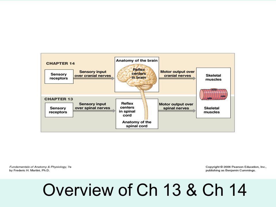 Overview of Ch 13 & Ch 14