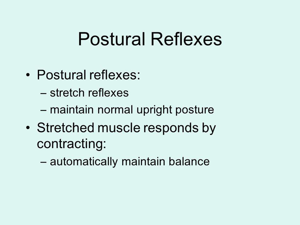 Postural Reflexes Postural reflexes: