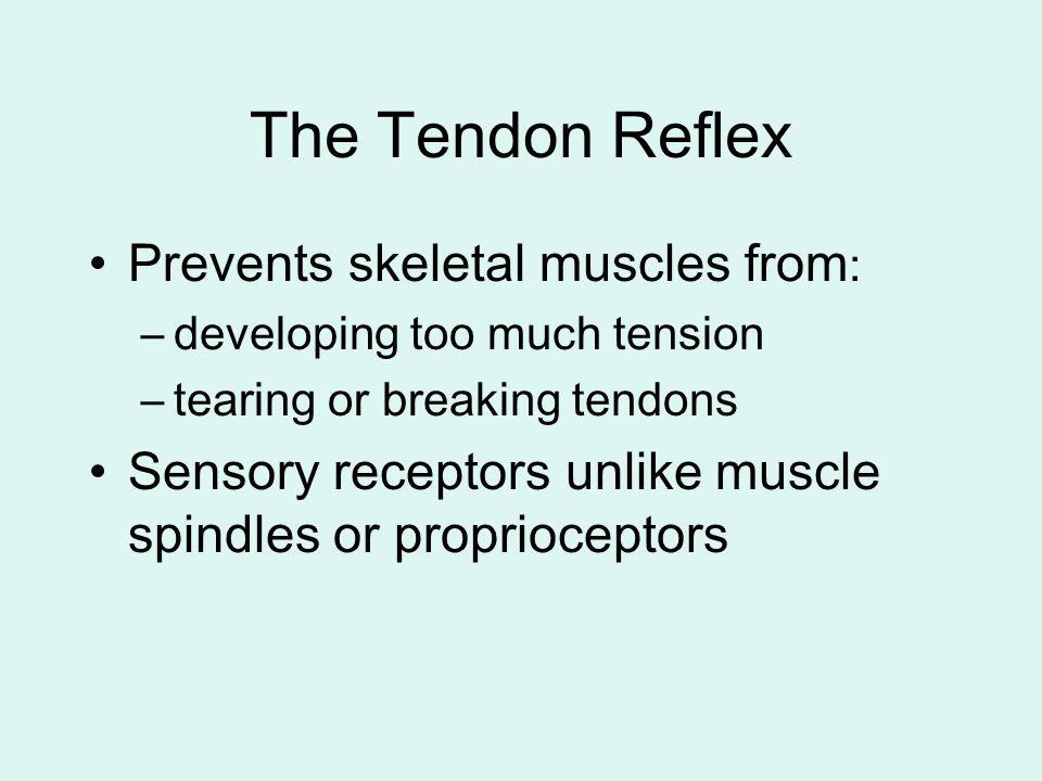 The Tendon Reflex Prevents skeletal muscles from: