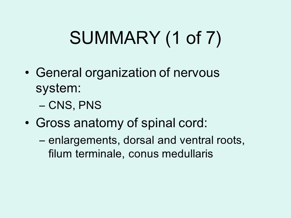SUMMARY (1 of 7) General organization of nervous system: