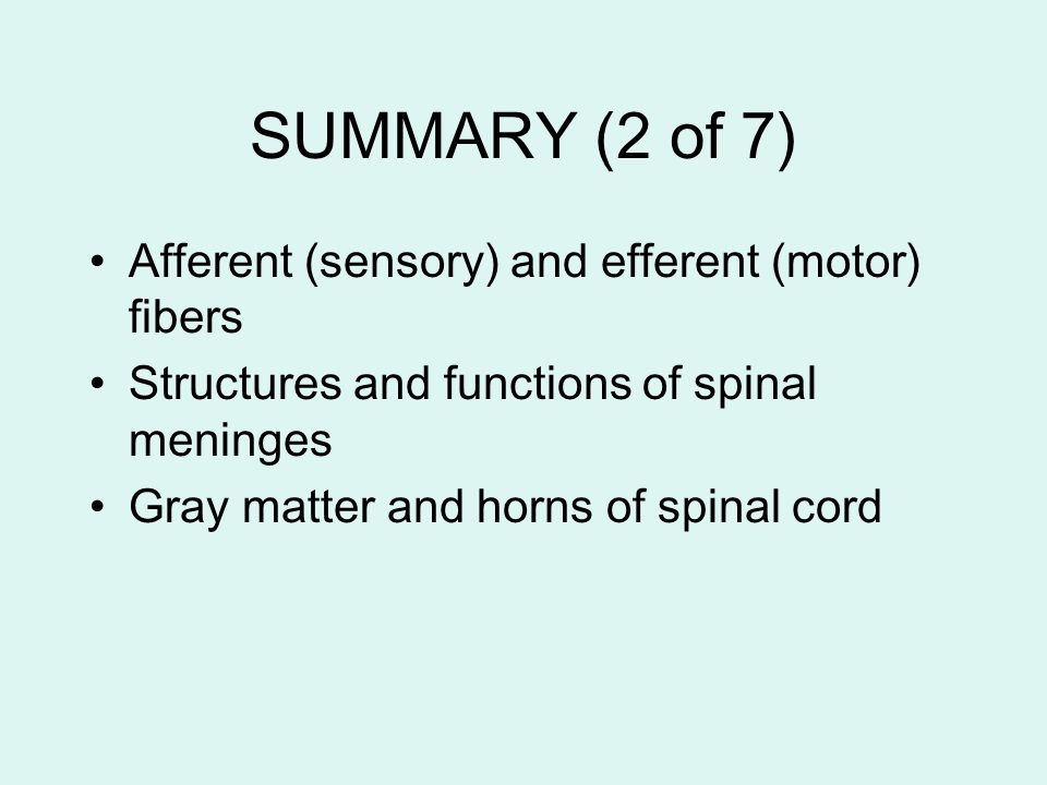 SUMMARY (2 of 7) Afferent (sensory) and efferent (motor) fibers