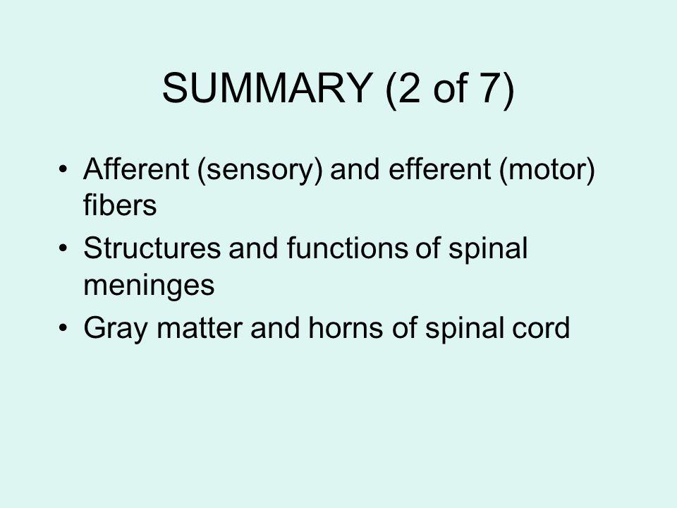 SUMMARY (2 of 7) Afferent (sensory) and efferent (motor) fibers