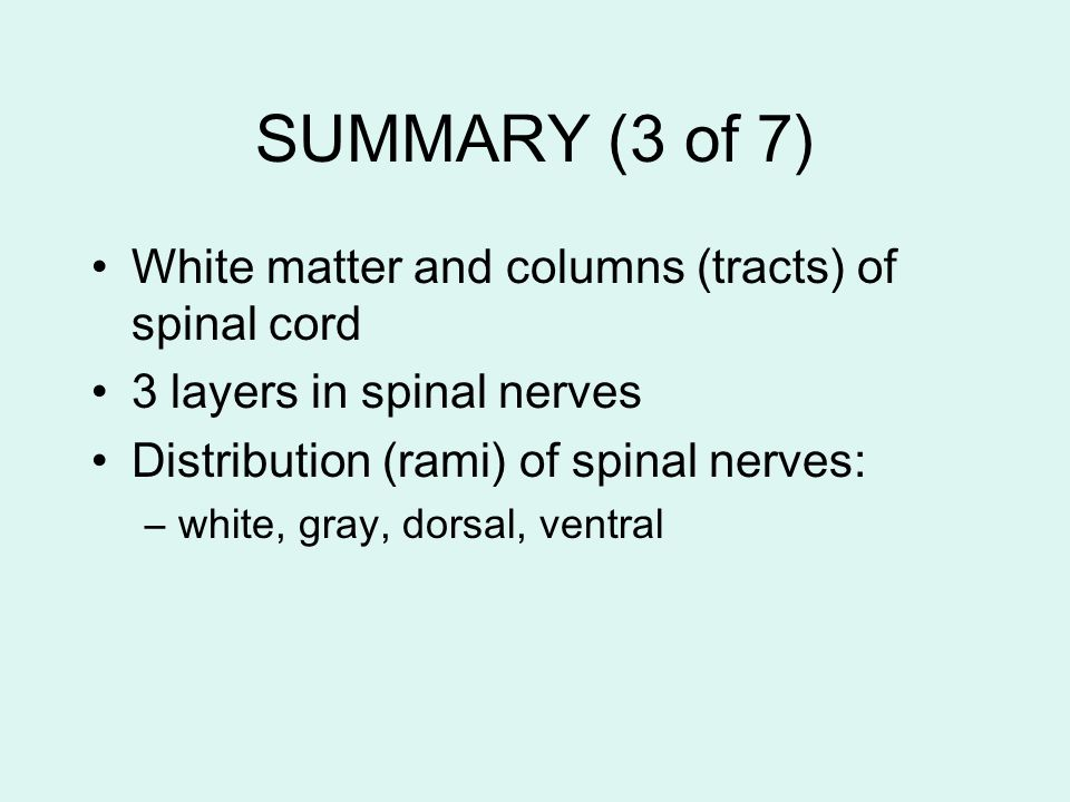 SUMMARY (3 of 7) White matter and columns (tracts) of spinal cord