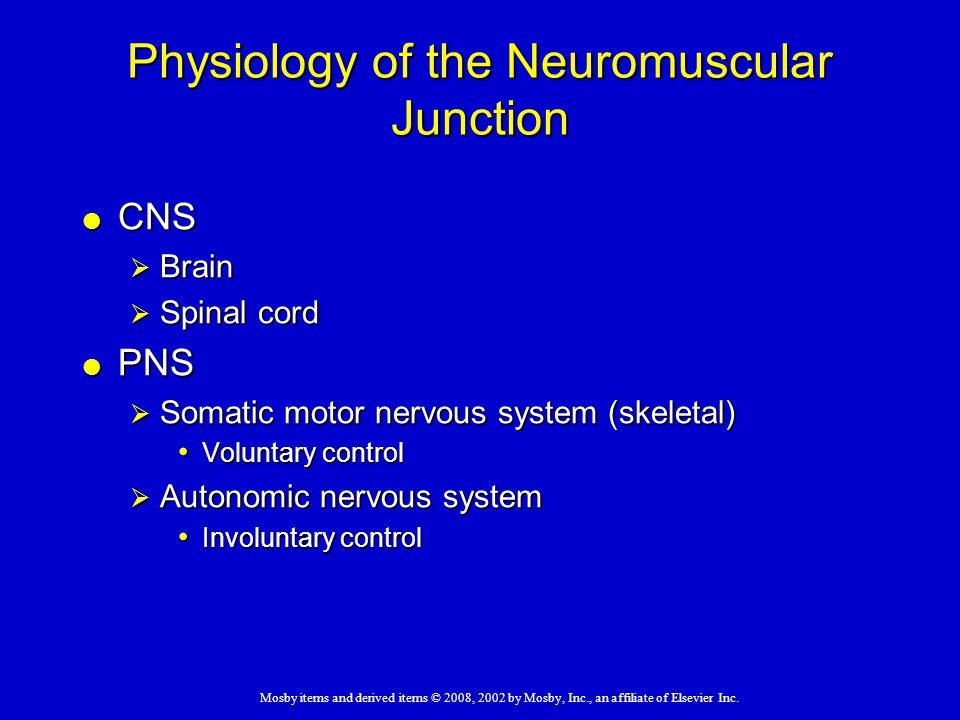 Physiology of the Neuromuscular Junction
