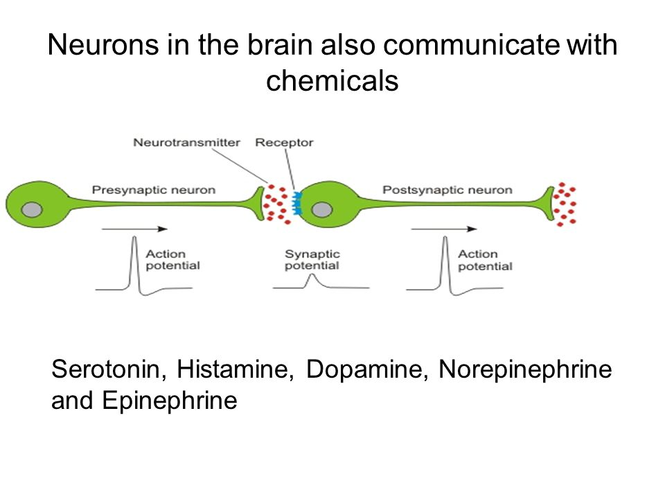 Neurons in the brain also communicate with chemicals