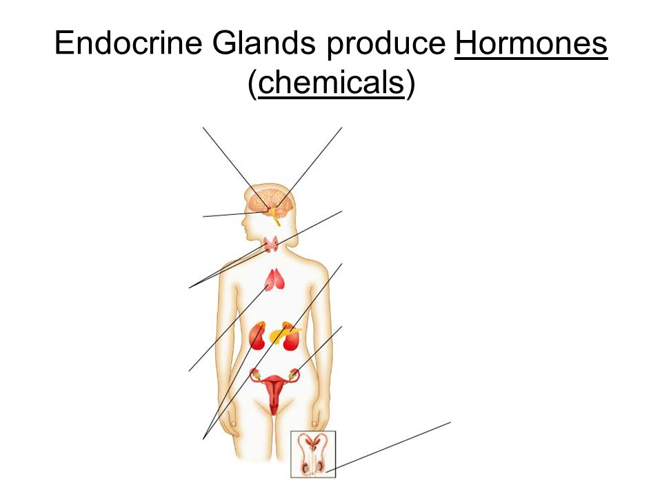 Endocrine Glands produce Hormones (chemicals)