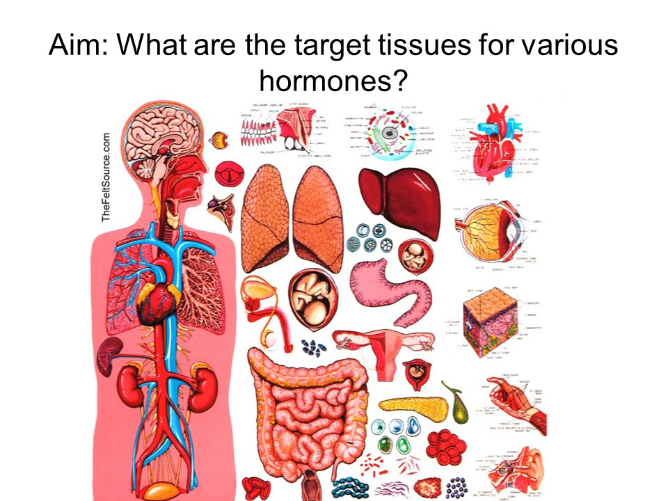 Aim: What are the target tissues for various hormones