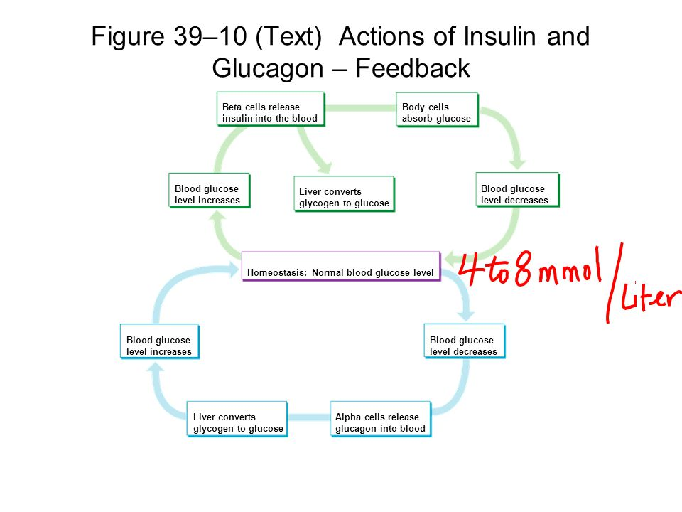 Figure 39–10 (Text) Actions of Insulin and Glucagon – Feedback