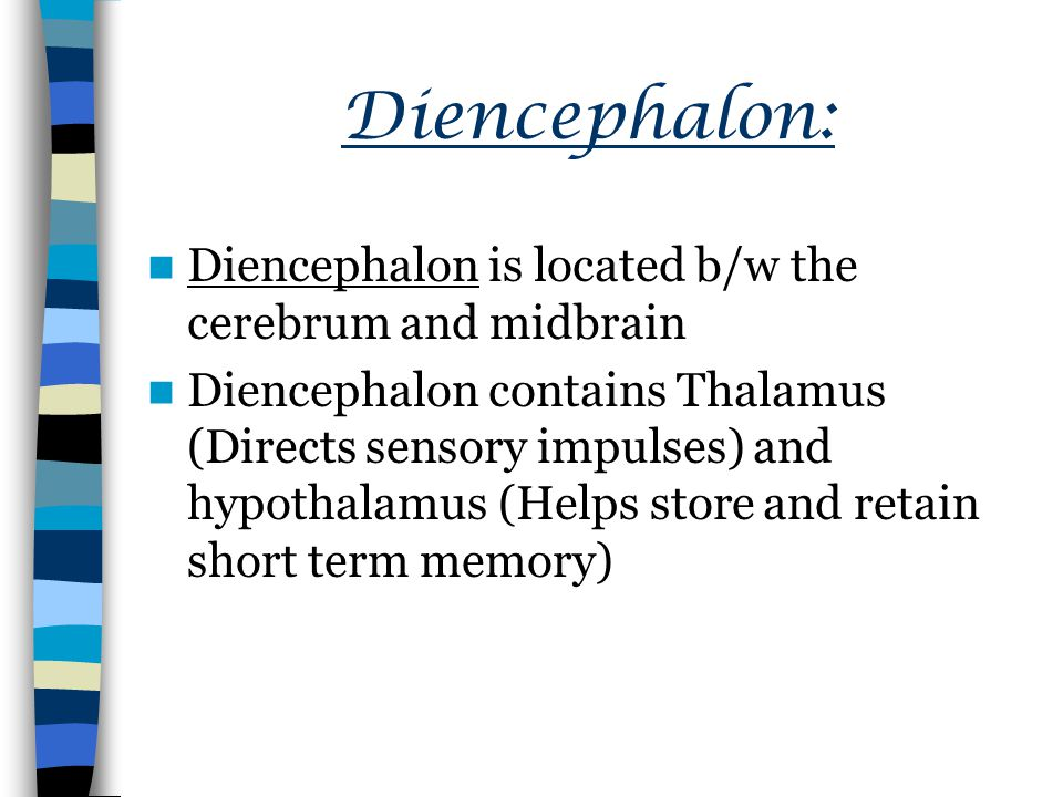 Diencephalon: Diencephalon is located b/w the cerebrum and midbrain