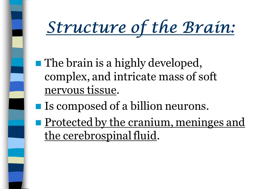 Structure of the Brain: