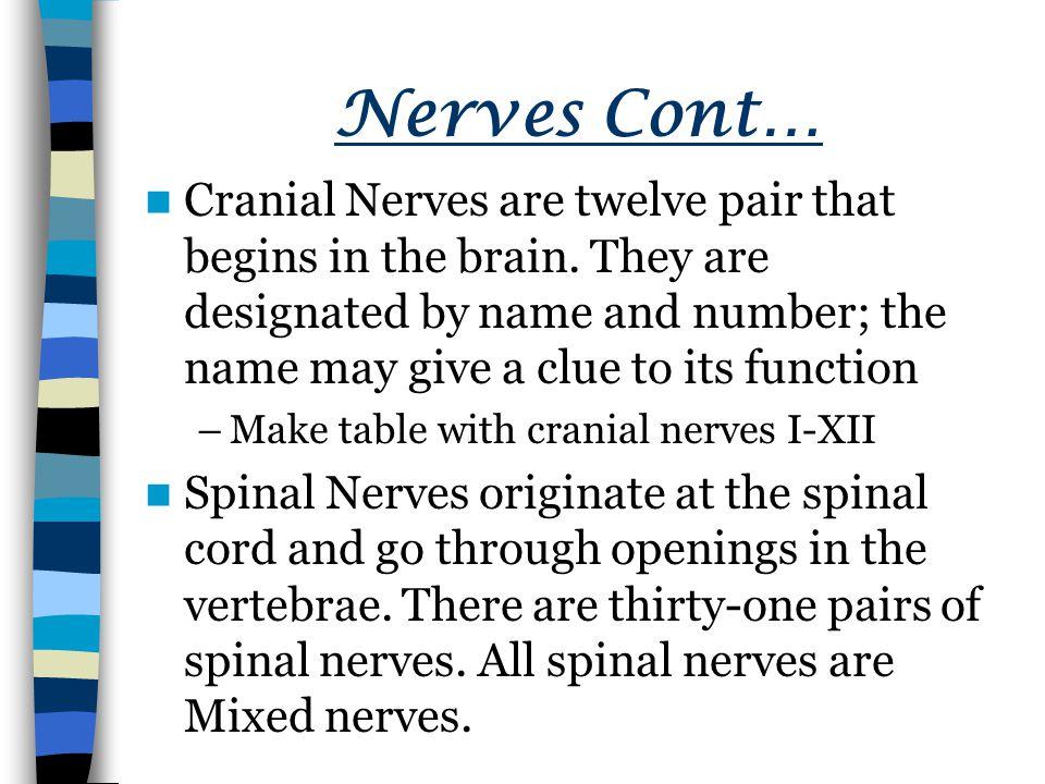 Nerves Cont…
