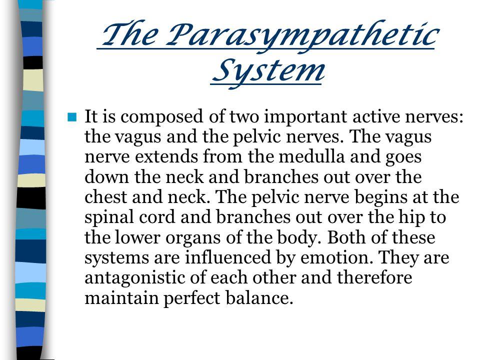 The Parasympathetic System